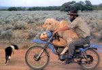 sheepmanmotorcycle.jpg